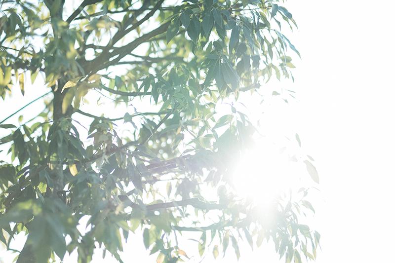 ブランレヴュー宇都宮アクアテラス、出張撮影!いい天気