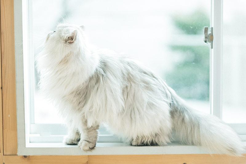 ペットフォト、猫!アンニン