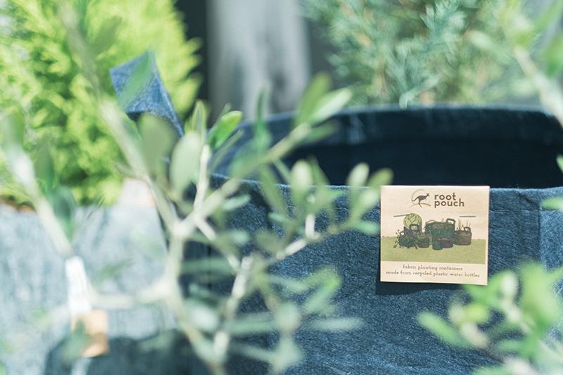 植物植え替え、Root Pouchの不織布製植木鉢