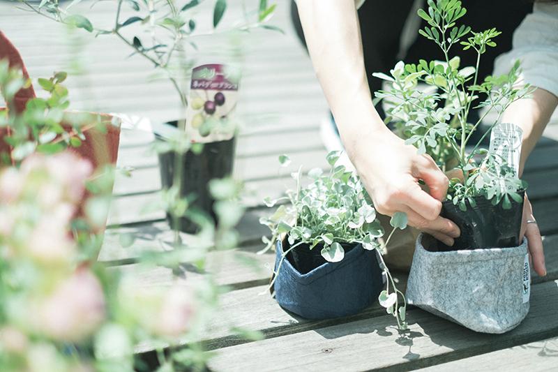 植物植え替え、植物ごとに使うRoot Pouchの選定