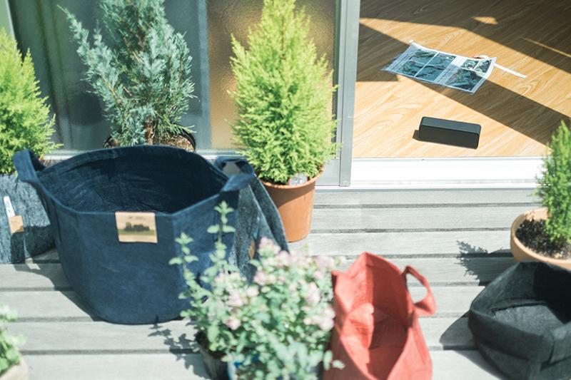 植物植え替え、Root Pouchの不織布製植木鉢と植え替え前の植物