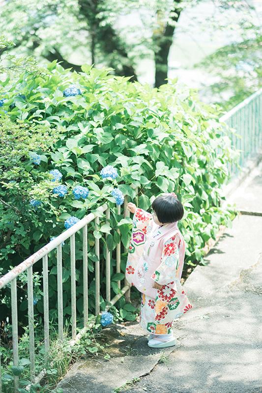 鹿沼千手山公園出張撮影、七五三!りほちゃん!紫陽花と