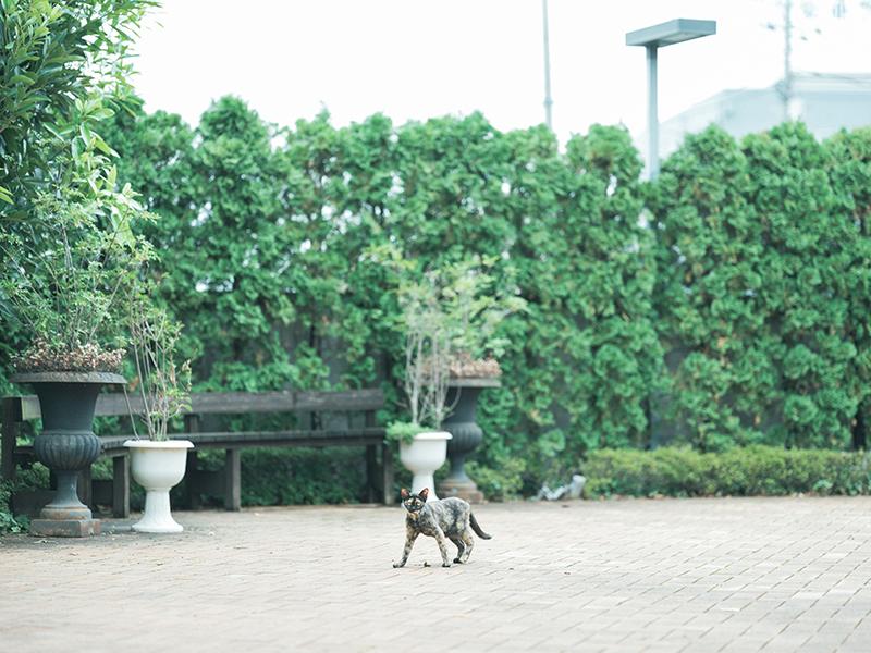 ウディング前撮り、オワゾブルー宇都宮でメイク、ネコさん