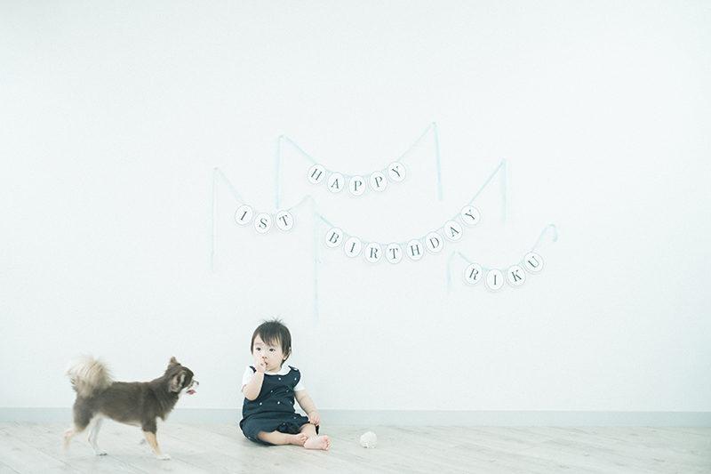1歳バースデーフォト、りくくん!愛犬と