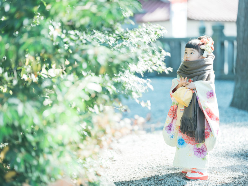 白鷺神社、3歳七五三、ふみちゃん!ストール