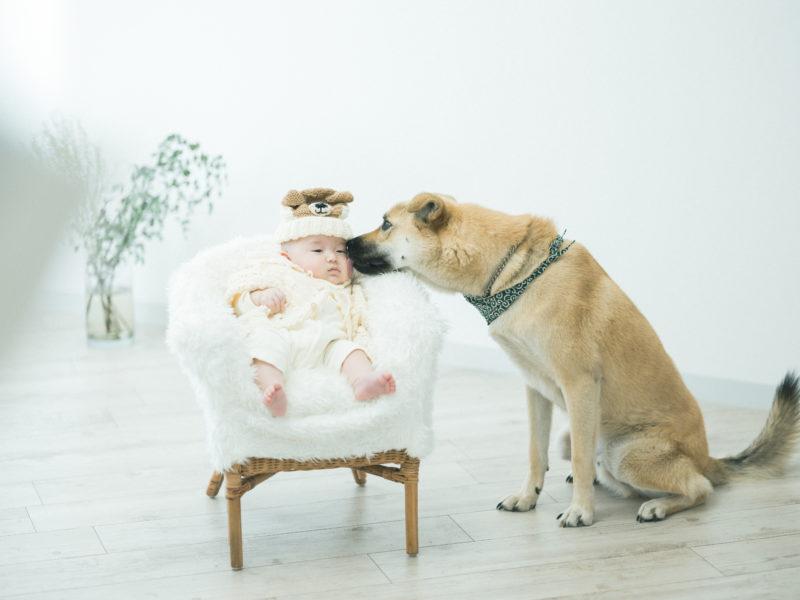 たくちゃんファミリーフォト、犬と赤ちゃん