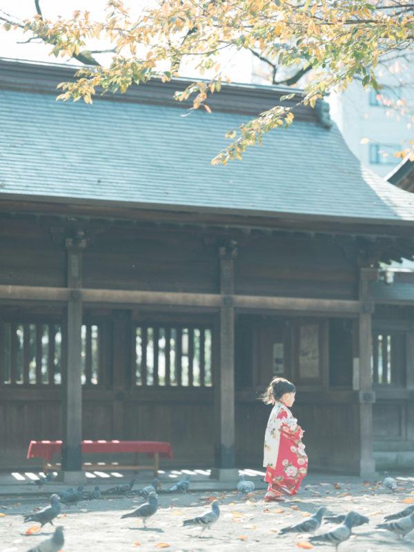 宇都宮二荒山神社、出張撮影、わかちゃん!3歳七五三、鳩