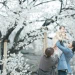下野市出張ロケーション撮影、桜、はなのちゃん!家族写真