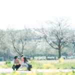 ろまんちっく村、桜ロケーション!3歳七五三、はなちゃん!菜の花で家族写真