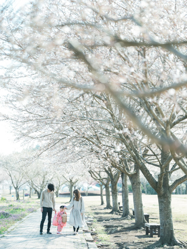 ろまんちっく村、桜ロケーション!3歳七五三、はなちゃん!家族写真
