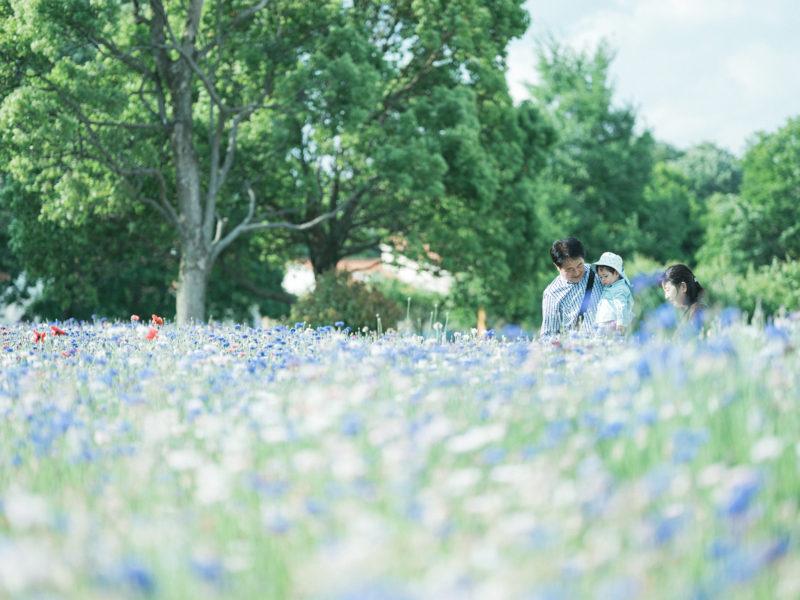 出張ロケーションフォト、たっくん、家族写真!おじいちゃん、おばあちゃんと、お花畑