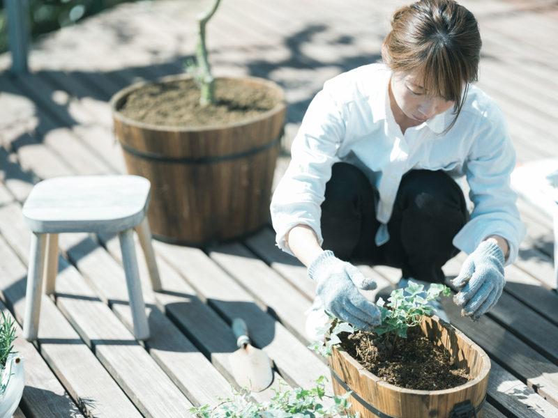 ガーデニング、アイビーを植える