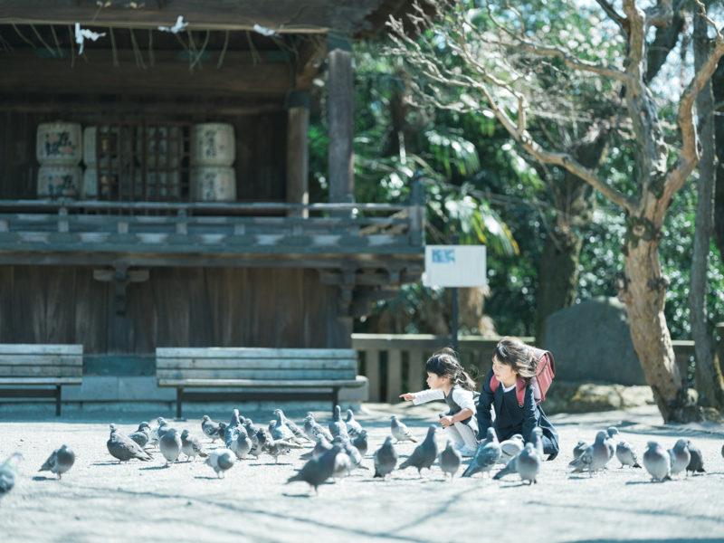 宇都宮二荒山神社、お宮参り!鳩