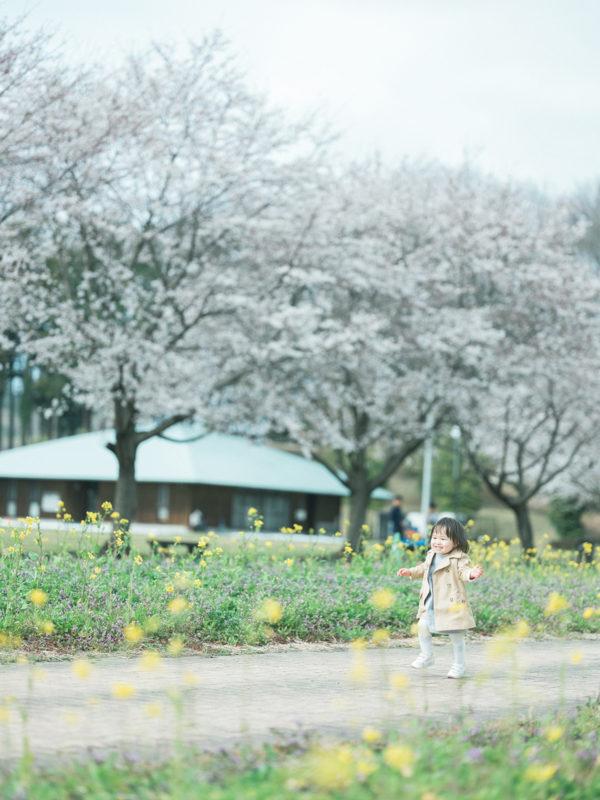 ろまんちっく村、桜ロケ、はなのちゃん!