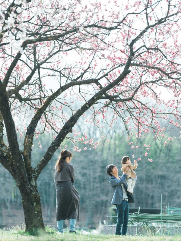 ろまんちっく村、桜ロケ、はなのちゃん!家族写真、高い高い