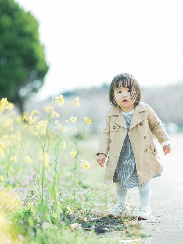 ろまんちっく村、桜ロケ、はなのちゃん!菜の花