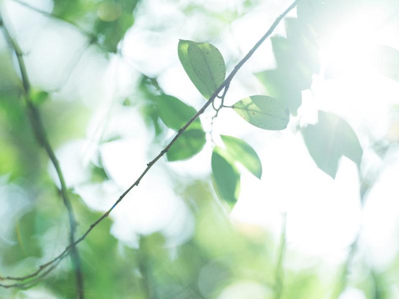 宇都宮二荒山神社、3歳七五三、めぐちゃん!夏の陽気