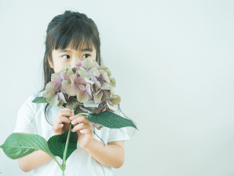 いろはちゃん、7歳バースデーフォト!紫陽花