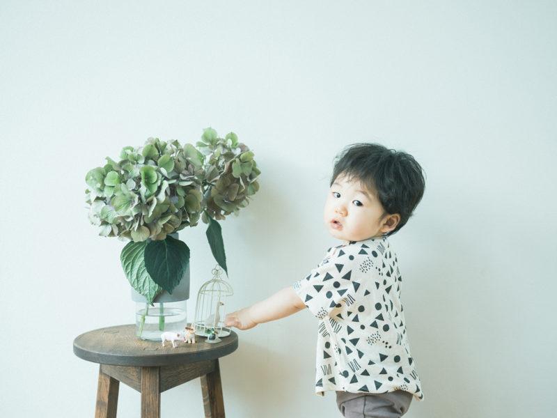 1歳バースデーフォト、いずみくん!紫陽花