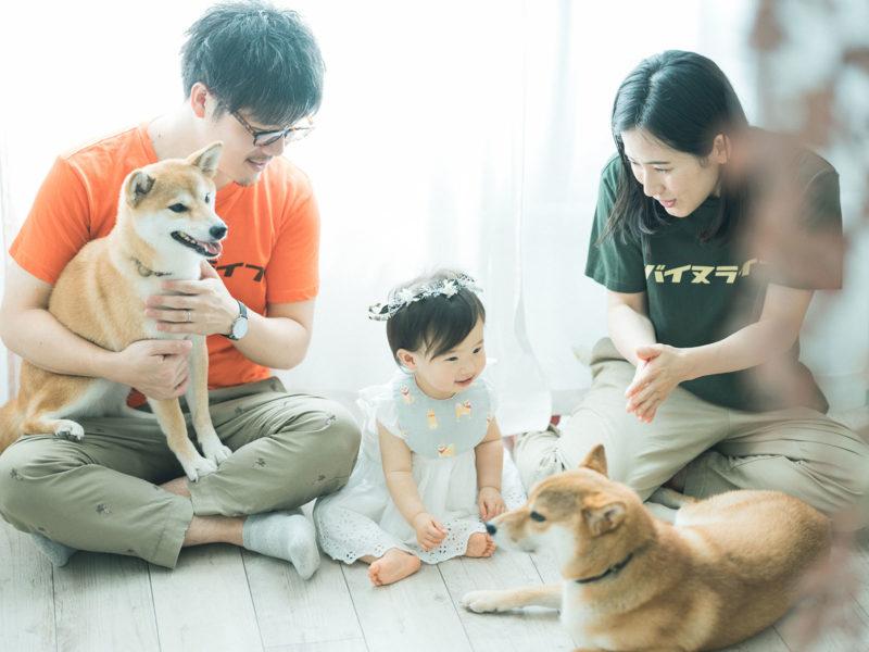 ちひろちゃんファミリー、家族写真!柴犬と一緒に