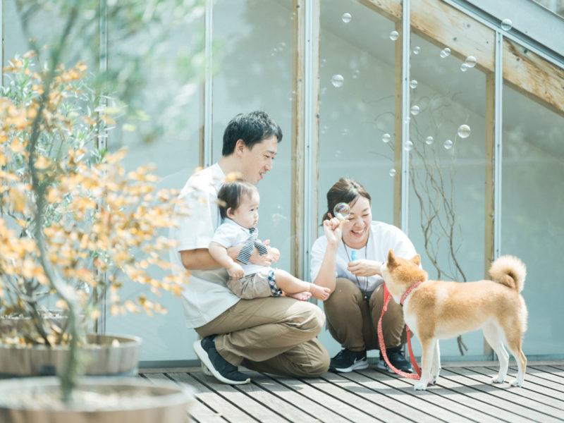 さくくん、家族写真!シャボン玉、柴犬