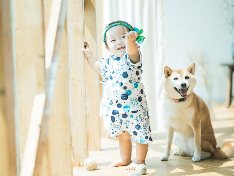 さくくん、家族写真!柴犬と一緒に