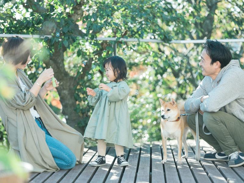 2歳バースデーフォト、あおいちゃん!家族写真、柴犬あずき