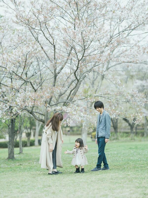 3歳バースデーフォト、はなのちゃん!桜
