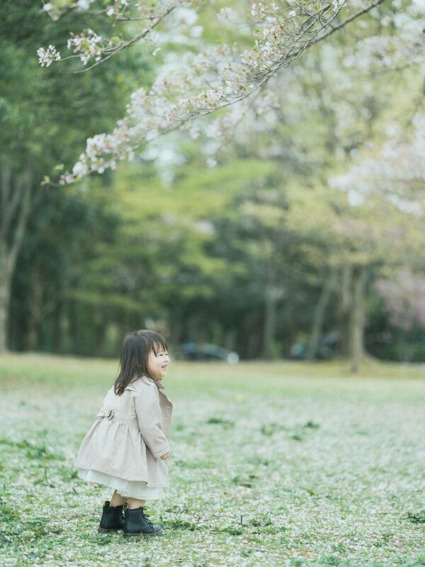 3歳バースデーフォト、はなのちゃん!桜と