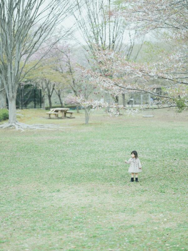 3歳バースデーフォト、はなのちゃん!桜ぽつん
