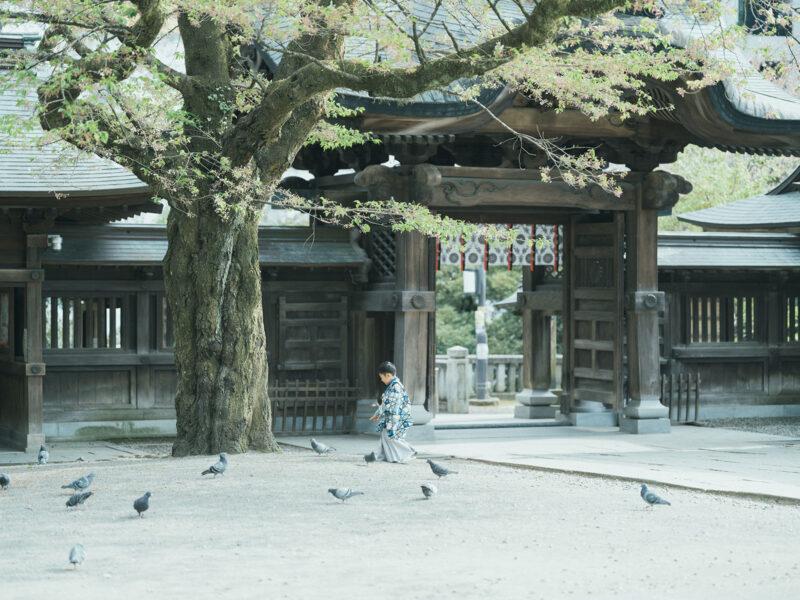 宇都宮二荒山神社、5歳七五三ロケ、えいたくん!鳩