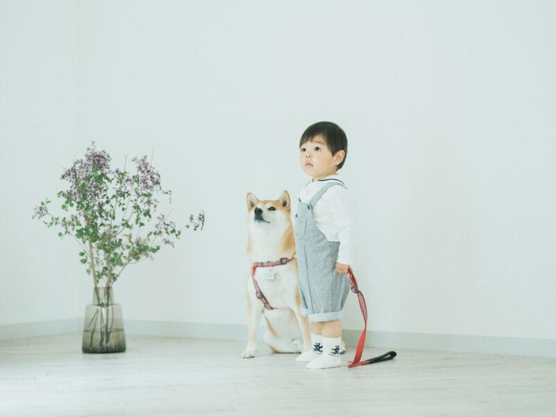 1歳バースデーフォト、はるくん!柴犬